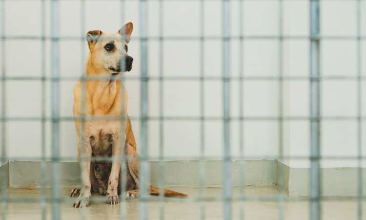 Post thumbnail of Singapore's animal welfare groups struggle to stay afloat amid manpower crisis