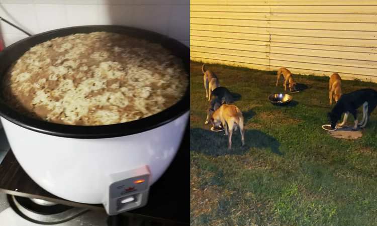Post thumbnail of Kind feeder prepares hot food to keep stray dogs warm in the rainy weather