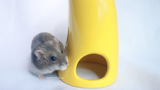 , Animal lovers come together to rescue hamsters, guinea pigs and chickens