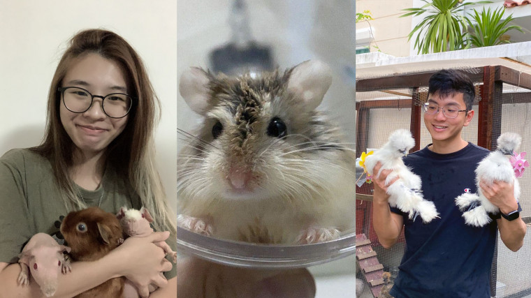 Animal lovers come together to rescue hamsters, guinea pigs and chickens